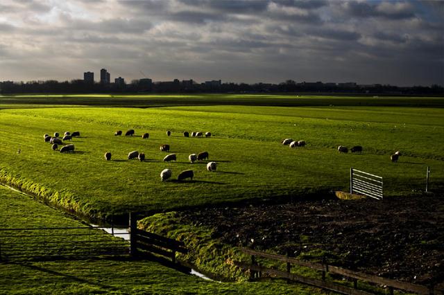 zoetermeer-gras.jpg