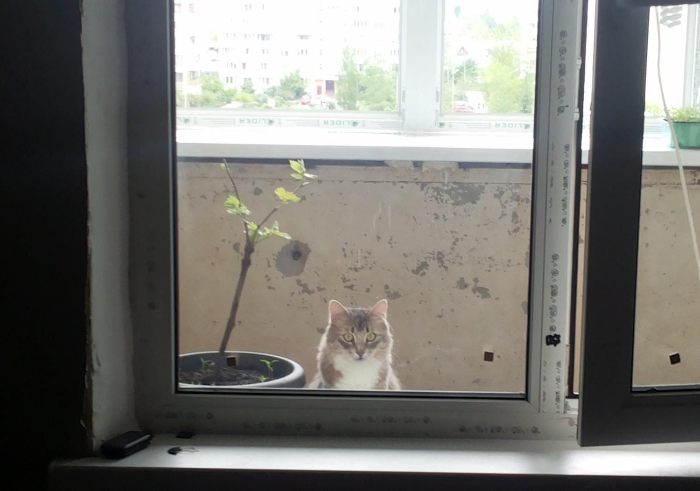 gm_window_cat